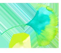 ginkgo-leaf-footer